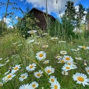 Пингвин Скалолаз on My World.